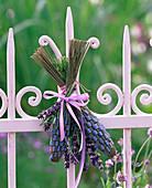 Lavandula (Lavendel) zu Lavendelflaschen zusammengebunden