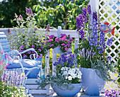 Blauer Balkon mit Delphinium (Rittersporn), Salvia farinacea (Mehlsalbei)