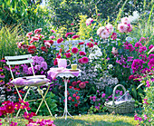 Sitzplatz am Sommerbeet: Dahlia (Dahlien), Phlox (Flammenblumen)