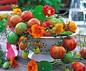Lycopersicon (Tomaten), Tropaeolum (Kapuzinerkresse), Anethum (Dill)