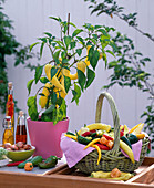 Capsicum (Paprika , Peperoni), Pflanze und Korb