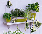 Herbs on wall shelf