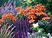 Orange Lilien und violetter Ziersalbei