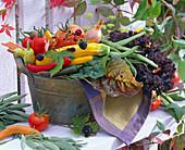 Lycopersicon (Tomaten), Cucurbita (Zucchini), Capsicum (Peperoni), Allium