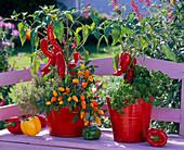 Capsicum (paprika, ornamental paprika), Thymus citriodorus