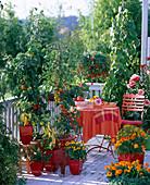 Naschbalkon mit Lycopersicon (Tomaten) und Capsicum (Paprika)