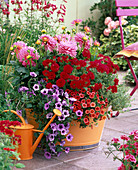 Dahlia (Dahlie), Verbena (Eisenkraut), Petunia , Calibrachoa