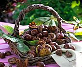 Korb mit Aesculus (Kastanie, Blätter, Früchte, Hüllen) in Korb, Serviette