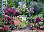 Kübelpflanzenterrasse mit pinken und blauen Blüten
