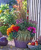 Violetter Kübel mit Herbstbepflanzung