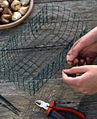 Tulpenzwiebeln in selbstgemachten Drahtkorb pflanzen: 2/4