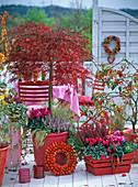 Roter Herbstbalkon mit Schlitzahorn und Zierapfel