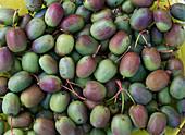 Actinidia arguta 'Issai' (Kiwi)