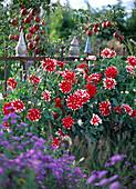 Herbst Zaun rot-weiß