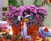 Herbst pink Blüten Beeren