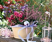 Calluna Garden Girls 'Annette' (knospenblühende Heide)
