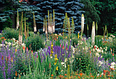 Beet mit Eremurus (Steppenkerze), Salvia (Salbei), Kniphofia (Fackellilie)