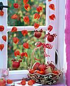 Physalis (Lampions) aufgefädelt ins Fenster gehängt, Malus (Äpfel), Korb