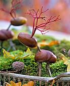 Hirsch aus Aesculus (Kastanie), Quercus (Eichel), Cornus (Hartriegel)