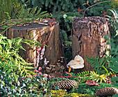 Baumpilze wachsen aus morschen Baumstümpfen