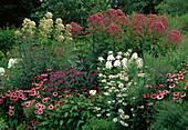 Echinacea (Purpur - Sonnenhut), Monarda (Indianernessel), Phlox paniculata (Flammenblumen), Polygonum (Knöterich), Eupatorium (Wasserdost)