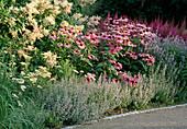 PIET OUDOLF PLANTING at DREAMPARK, ENKOPING, SWEDEN: Echinacea PURPUREA 'MAGNUS', CALAMINTHA Nepeta, ASTILBE CHINENSIS Var TAQUETII 'PURPURLANZE', LYTHRUM VIRGATUM