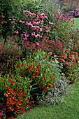 Echinacea PURPUREA,ERYNGIUM TRIPARTITUM,Achillea SUMMERWINE HELENIUM 'KUPFERZWERG'.DESIGN:PIET / ANJA OUDOLF