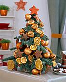 Abies procera (Nobilistanne) als Mini - Weihnachtsbaum
