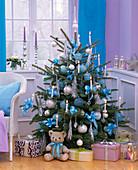 Picea pungens 'Glauca' (Stechfichte) als Weihnachtsbaum geschmückt