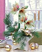 Pinus (Kiefer) und Hippeastrum (Amaryllis), mit goldenen Weihnachtsbaumkugeln