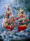 Picea 'Conica' (Zuckerhutfichte) als lebendige Weihnachtsbäume im Rauhreif