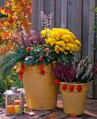 Kübel herbstlich bepflanzt mit Chrysanthemum (Herbstchrysantheme)