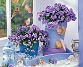 Campanula 'Blue Ball' (Glockenblumen) am Fenster, mit Muscheln, Leuchtturm