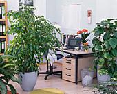 Büro mit Grünpflanzen