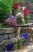Trockenmauer an der Terrasse, Töpfe mit Nicotiana (Ziertabak)