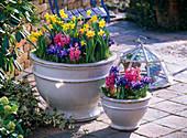 Narcissus 'Tete a Tete' (Narzissen), Iris reticulata (Netziris)
