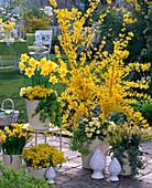 Gelbe Terrasse mit Forsythia (Goldglöckchen), Narcissus (Narzissen)
