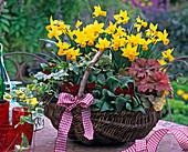 Narcissus 'Jetfire' (Narzissen), Primula Belarina 'Corporal Baxter'