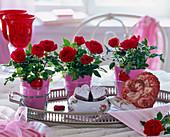 Rosa (Topfrosen), rot, Mini, mit pinkem Papier in Gläser gestellt