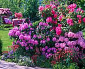 Rhododendron (Alpenrosen), Aquilegia (Akeleien), Heuchera