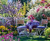 Malus (Zierapfel), Spiraea arguta (Brautspiere), Tulipa (Tulpen)