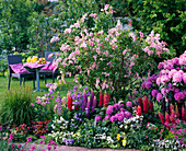 Syringa reflexa (Bogenflieder), Lupinus (Lupinen), Rhododendron
