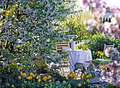 Malus 'Evereste' (Zierapfel), Tulipa 'Golden Apeldoorn'