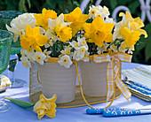 Sträuße aus Narcissus 'Carlton' (Osterglocken, gelb), 'Minnow' 'Las Vegas'