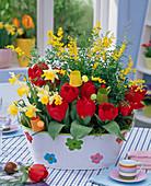Tulipa 'Red Paradise' (Tulpen), Narcissus (Narzisse)