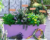 Plantin herbs in wooden box