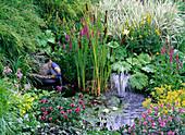 Teich bepflanzt mit Nymphaea (Seerose), Tyhpa (Rohrkolben)