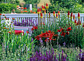 Kniphofia (Fackellilie), Lilium asiaticum 'Red Dwarf ' (Lilien)