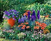 Lilium asiaticum 'Orange Pixie' (Lilien), Delphinum (Rittersporn)