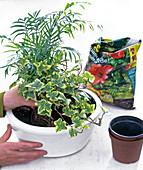 10 - Euro - Schale bepflanzen: 2/6
